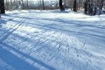 Лесная лыжня в Первомайском (за