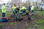 Высадка саженцев в продолжение экологической акции